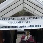 Expoziția de ovine si caprine ed. a.VII -a 2013