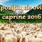 Expoziția de ovine si caprine 2016